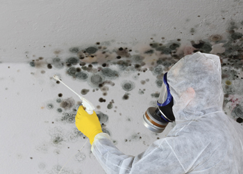 The Perils Of Living With Mould